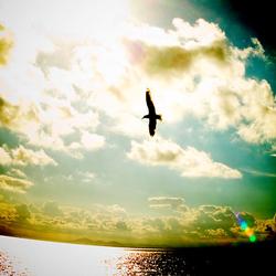 翼を広げる